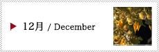 12月 / December